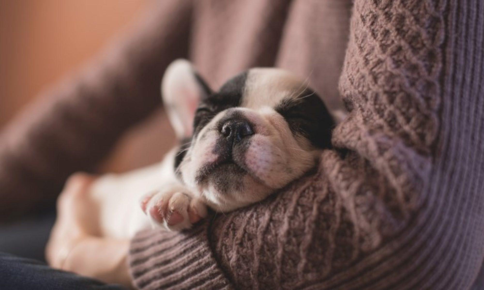 Pet Assurance through Oahu SPCA